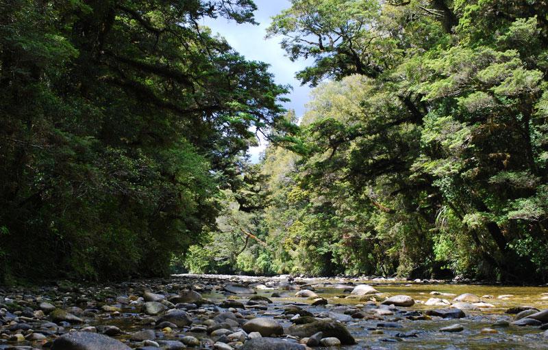 Pororari River Punakaiki Loop Track Walk