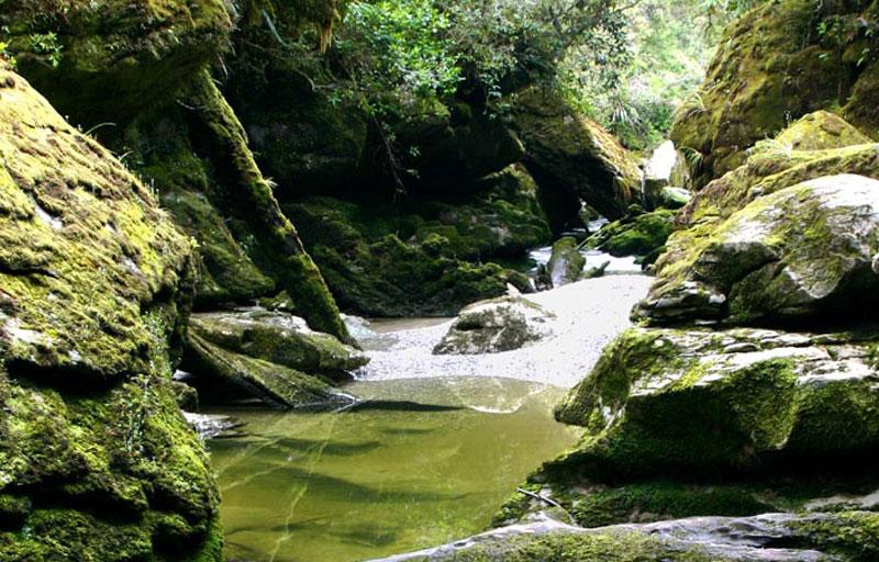 Cave Creek Track Walk
